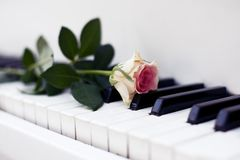 Rose on the piano Stock Image
