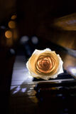 Rose on piano Royalty Free Stock Photography