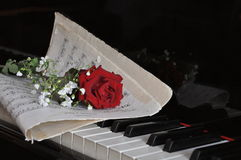 Rose on the piano. Rose and sheet music on piano keys Royalty Free Stock Image