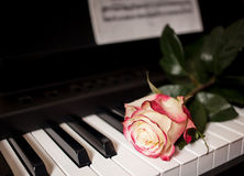 Rose on piano. Tea rose on a black piano royalty free stock photo