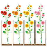 Rose piantate nel colore differente Fotografie Stock Libere da Diritti