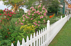 Rose Picket Fence. White picket fence alongside a garden containing roses royalty free stock image