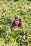 Rose picking festival Stock Photo