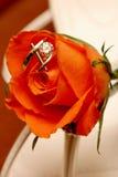 rose pierścionek Zdjęcia Royalty Free