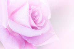 Rose Pink Blur Background. Royalty Free Stock Images