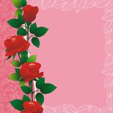 Rose on pink border Royalty Free Stock Images