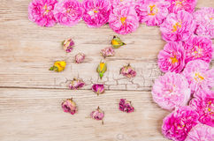 Rose. Pink rose buds and dry roses on old wooden table Royalty Free Stock Photography