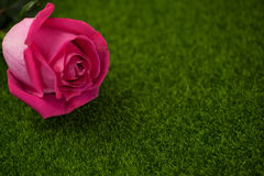 Rose of pink color lies Royalty Free Stock Photography