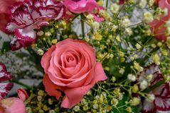 Rose pink and flowers bouquet Royalty Free Stock Images