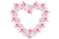 Rose pink flowers of the heart. Detail of valentine background made of pink rose petals Royalty Free Stock Photo