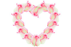 Rose pink flowers of the heart. Detail of valentine background made of pink rose petals Royalty Free Stock Photos