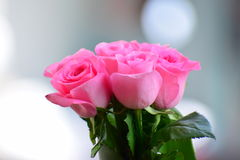 Rose is pink. Pink rose is love Stock Photography
