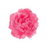 Rose pink separate vector Royalty Free Stock Images