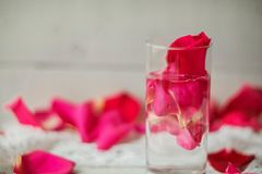 Rose petals in a bowl of water Royalty Free Stock Images