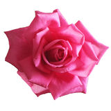 Rose. Pink rose on a white background Royalty Free Stock Photography