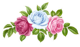 Rose pink white flowers green leaves isolated on white background. Digital watercolor illustration. Floral set bouquet bunch of pink, red, blue white vintage royalty free illustration