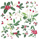 Rose plant and holly stock illustration
