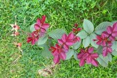 Rose Plant op aardachtergrond Royalty-vrije Stock Afbeeldingen