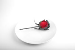 Rose in a plate. Unusual meal Royalty Free Stock Photos