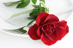 Rose on a plate. A red rose and a fork on a plate Royalty Free Stock Photos