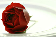 Rose on plate. Red rose on white plate Royalty Free Stock Photos