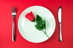 Rose in a plate Royalty Free Stock Image