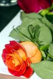 Rose on a plate. It is a vertical image Royalty Free Stock Image