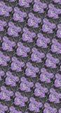 Rose porpora su Grayblack Fotografia Stock