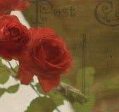 Rose Postcard rossa Immagine Stock Libera da Diritti