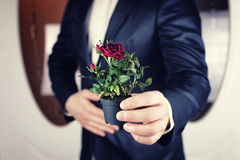 Rose in a pot man hold in hand Royalty Free Stock Photos