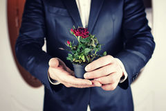 Rose in a pot man hold in hand Royalty Free Stock Images
