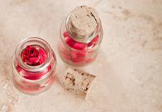 Rose potion Stock Photography