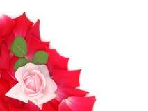 Rose pour le jour de valentines Images libres de droits