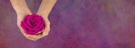 Rose rose pour vous bannière de message Images libres de droits