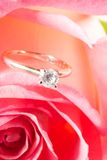 Rose present with a surprise. Romantic way to present a diamond ring inside beautiful rose on Valentine day Royalty Free Stock Images