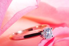 Rose present with a surprise. Romantic way to present a diamond ring inside beautiful rose on Valentine day Royalty Free Stock Photo
