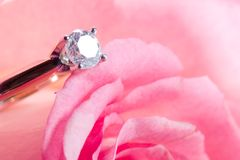 Rose present with a surprise. Romantic way to present a diamond ring inside beautiful rose on Valentine day Royalty Free Stock Photos