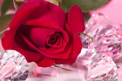 Rose present with a surprise Royalty Free Stock Photography