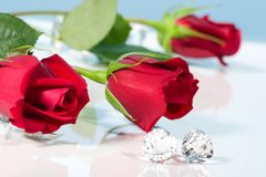Rose present with a surprise Royalty Free Stock Images