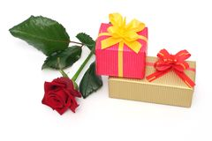 rose prezent Obraz Royalty Free