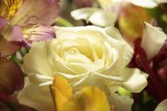 Rose, primer, beige, ramo Foto de archivo libre de regalías