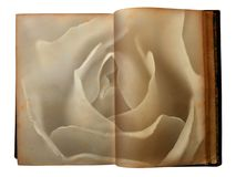 Rose printed on the pages of an open old book Stock Photos