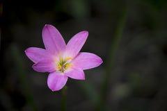 rose proche de fleur vers le haut Photo stock