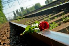 Rose an a railroad Royalty Free Stock Photos