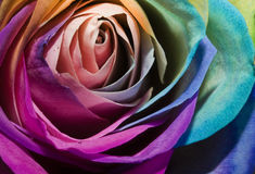 Rose Rainbow Royalty Free Stock Photo