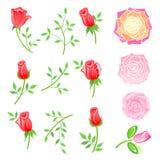 Rose & ramoscello con le foglie messe illustrazione di stock