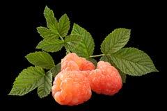 Rose raspberry fruit on black royalty free stock photos