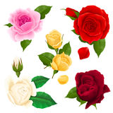 Rose Realistic Set Photographie stock