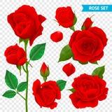 Rose Realistic Transparent Set Photo stock