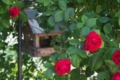 Rose Red photographie stock libre de droits
